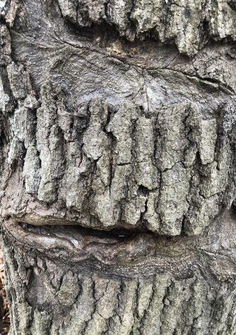 Tree Faced